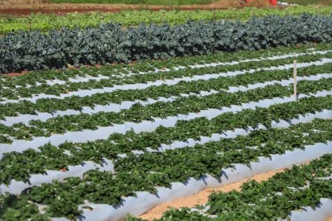 agricultura familiar 28 08 2020
