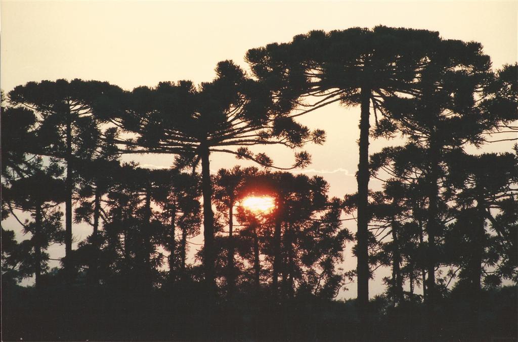 meio ambiente 13 12 2012 (Large)