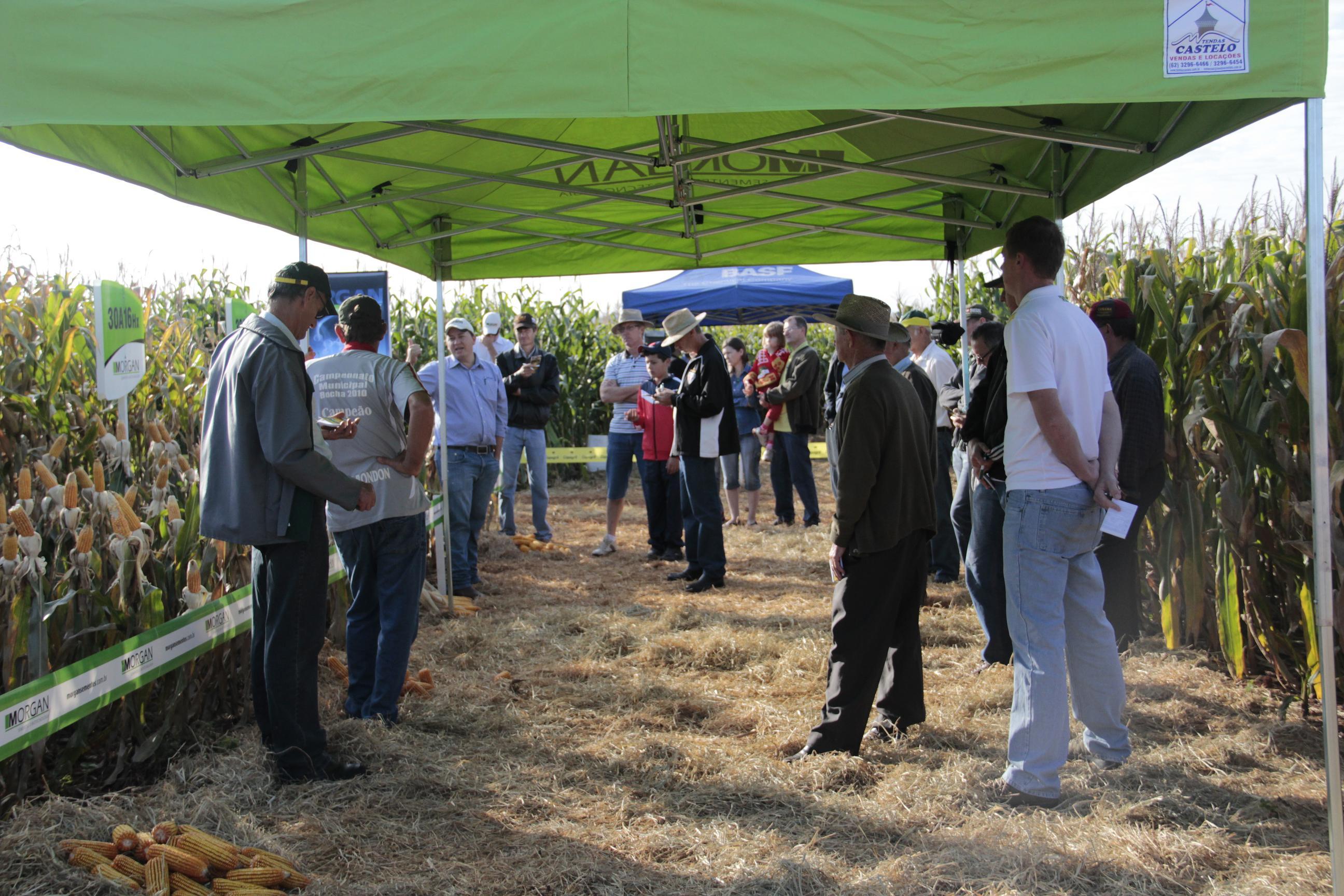 Dia de Campo milho safrinha 03 07 2012