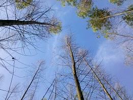 embrapa florestas 18 07 2014