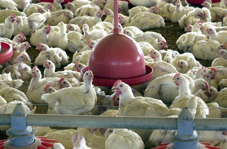UE confirma embargo à carne produzida no Brasil