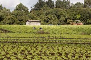 agricultura familiar 22 08 2019