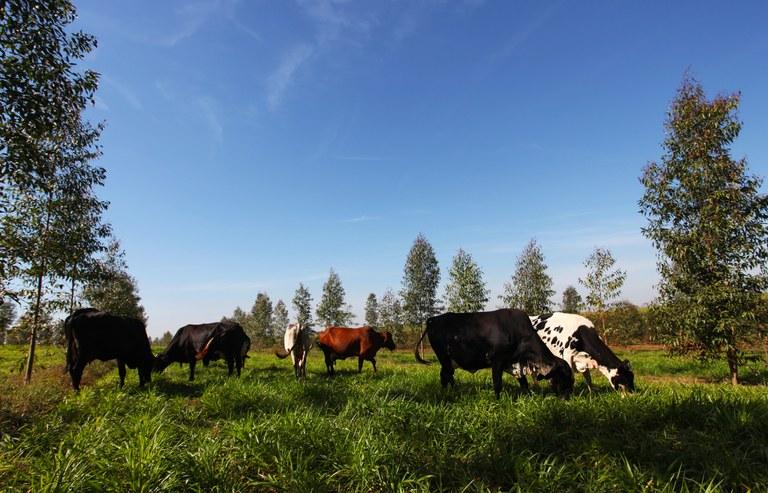 agricultura sustentavel 26 01 2021