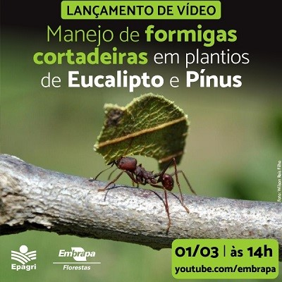 plantios florestais 18 02 2021