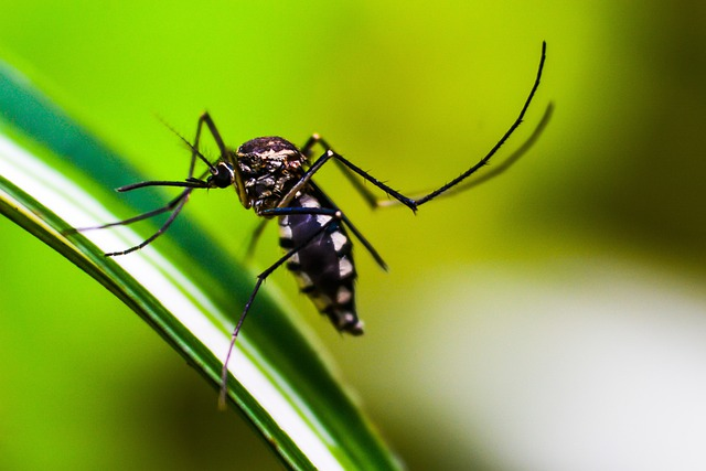 saude dengue 18 08 2021