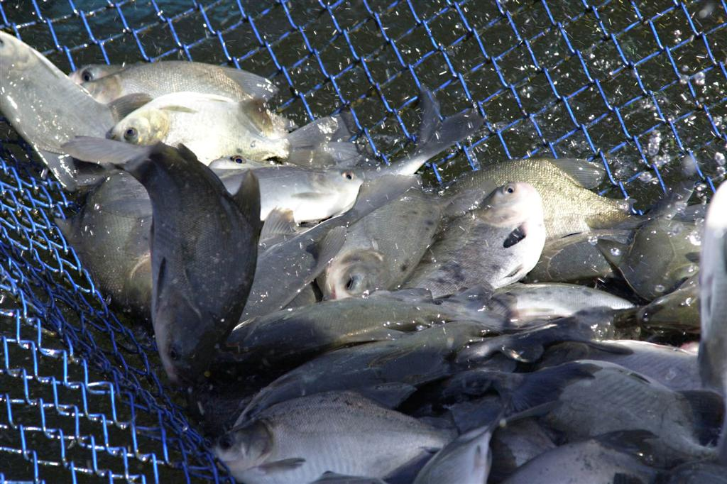 peixe 23 10 2012 Large